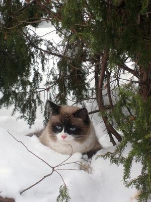 Засада кот, зима