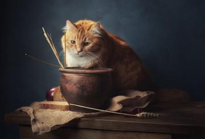 Разочарование натюрморт композиция постановка сцена кот питомец друг любимец рыжий горшок