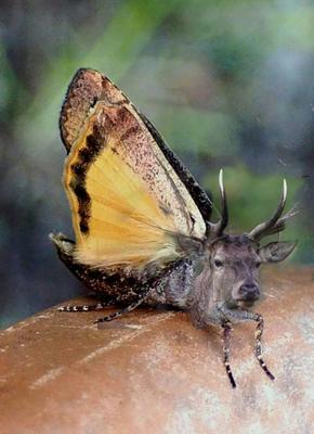 Бабочка - Олень