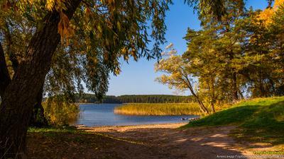 Приозерный пейзаж осень селигер пляж озеро берег