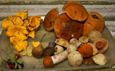25.08.2021.Лая.В лесу то грибочки намного веселее и эстетичнее выглядят...Но....потом...в супчике...хорошо смотрятся...!!! лая.красноголовик.подосиновик.обабок.подберёзовик