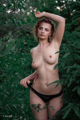 В тиши леса...