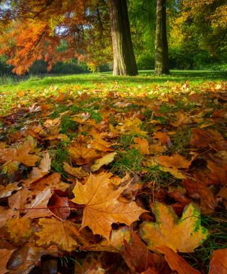 *** рассвет утро пейзаж olympus осень