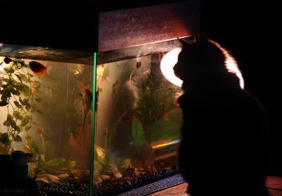 """Рыбак и """"пока еще плавающие"""" цели кот рыба аквариум рыбак"""