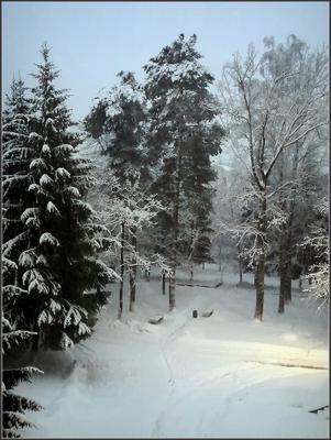 Закружило замело зима