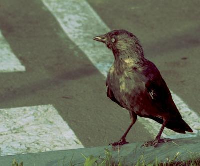 Птица птица животные