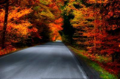 Дорога через буковый лес.