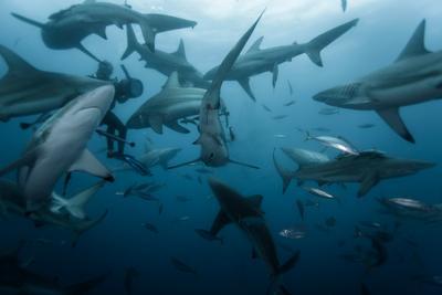 Среди акул Акулы