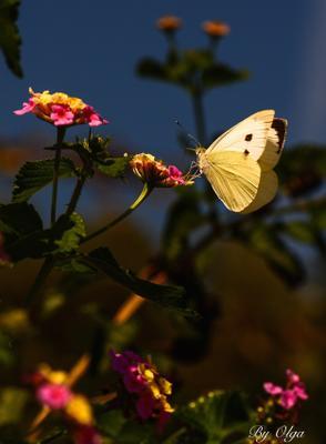 Осенние бабочки особенно красивы!