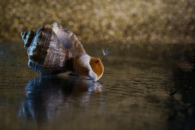 Поёт про море ракушка. Море ракушки