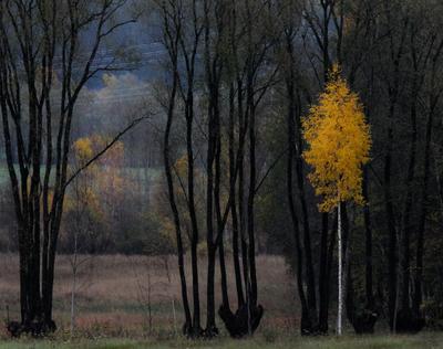 Осень играет с цветами Эстония akaasik
