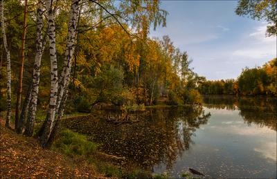 У осени красивая улыбка:) Осень Пруд