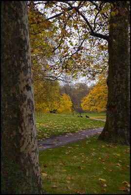Грин Парк лондон грин парк осень желтые листья деревья скамейка