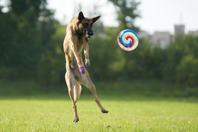 Фрисби Собака Собакен Малинуа Бельгийскаяовчарка Овчарка Фрисби Диск Тарелка SAL-70200G2