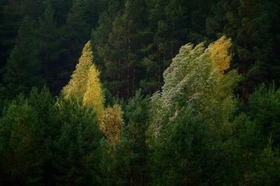 Осень... Осень лес
