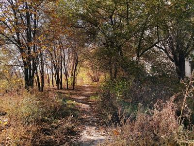 По кривой дорожке в осень мы пройдёмся неспеша... утро город окраина солнечно осень деревья листья трава дорожка петляет бежит тени зелень переплетения желтизна чёрный белый жёлтый зелёный оранжевый бежевый красота красиво