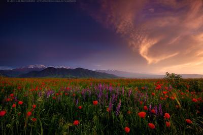 За гранью Тьмы и Света киргизия бишкек ала-тоо горы май маки горные цветы lazy_vlad lazyvladphoto