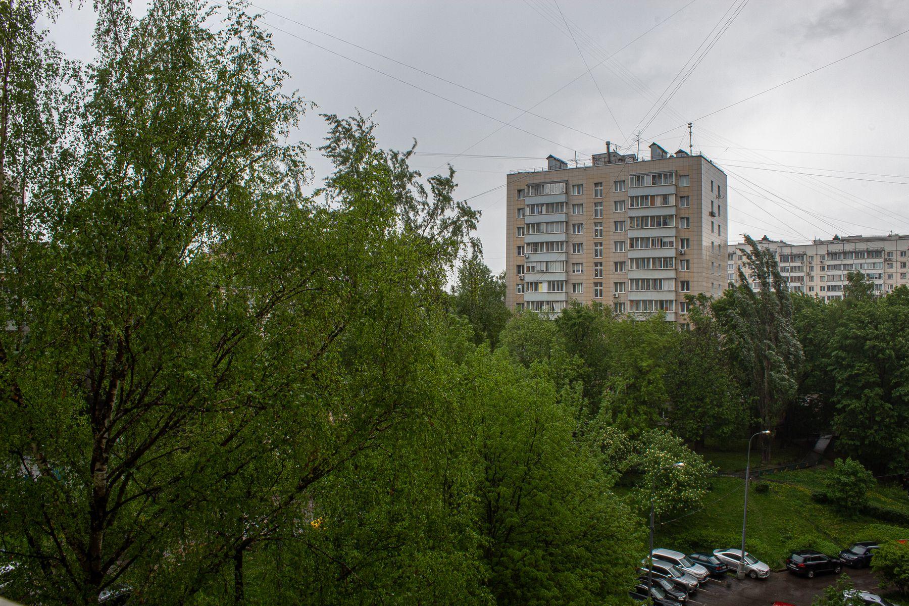 Дождь деревья двор дома дождь мокро зелень