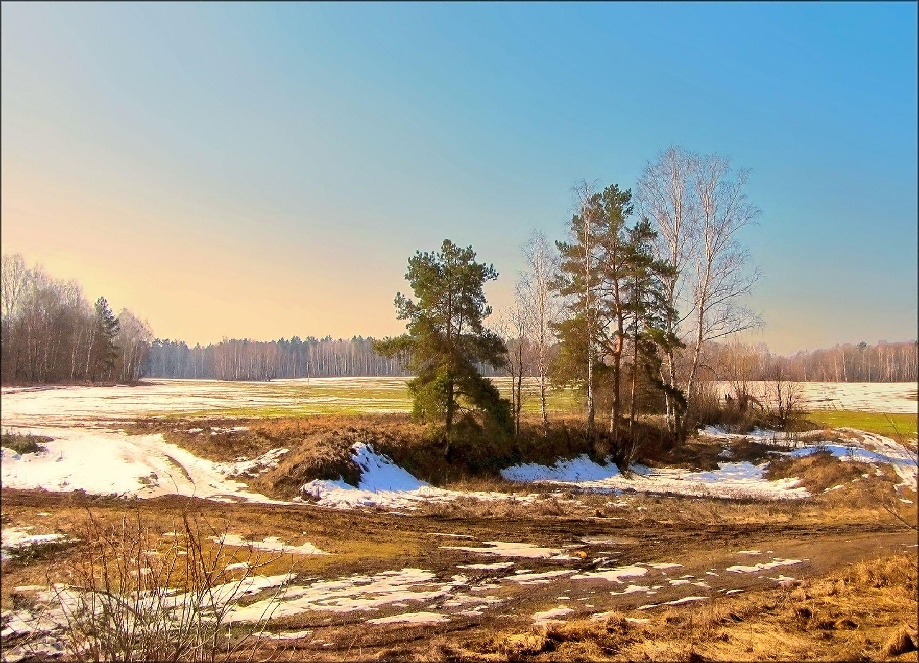 Весенняя зарисовка 3 поле островок деревца даль весна