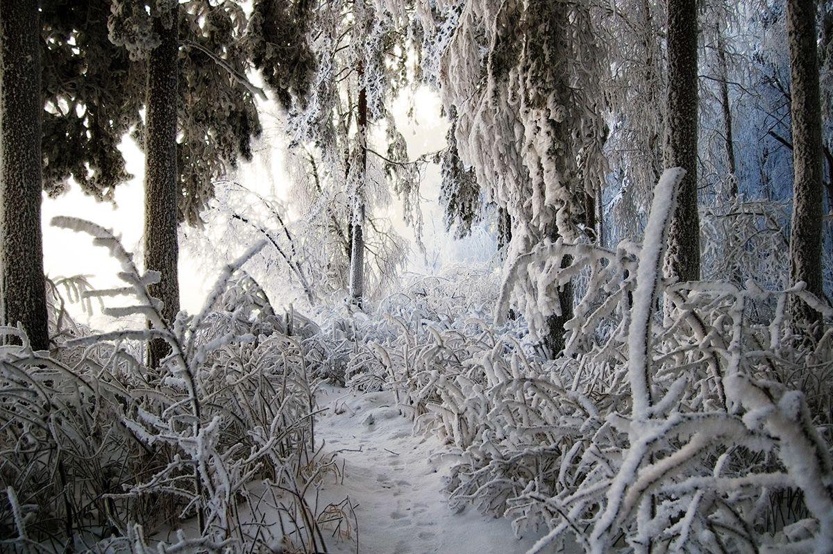 *** снег иней лес свет цвет