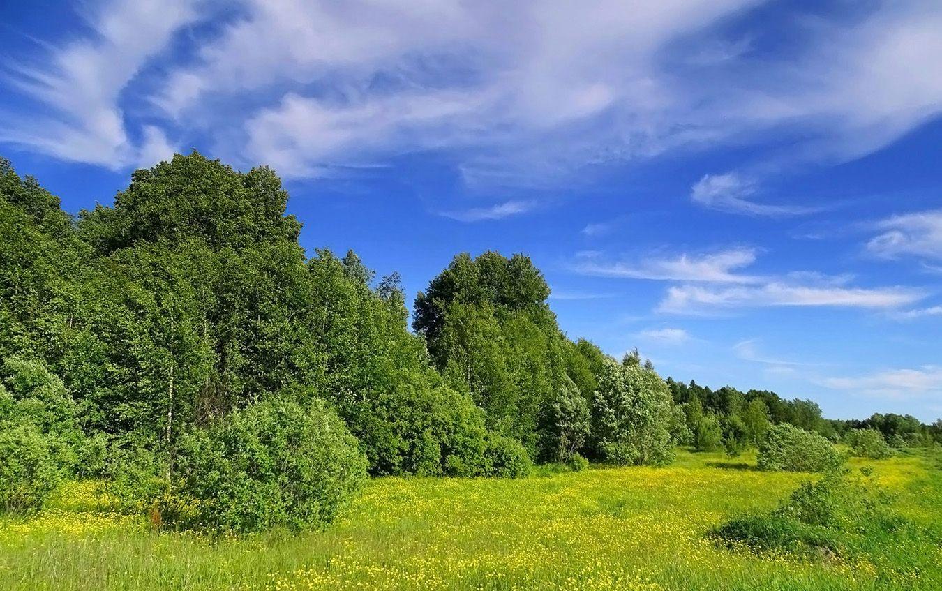 Сибирское лето Сибирь природа лето пейзаж
