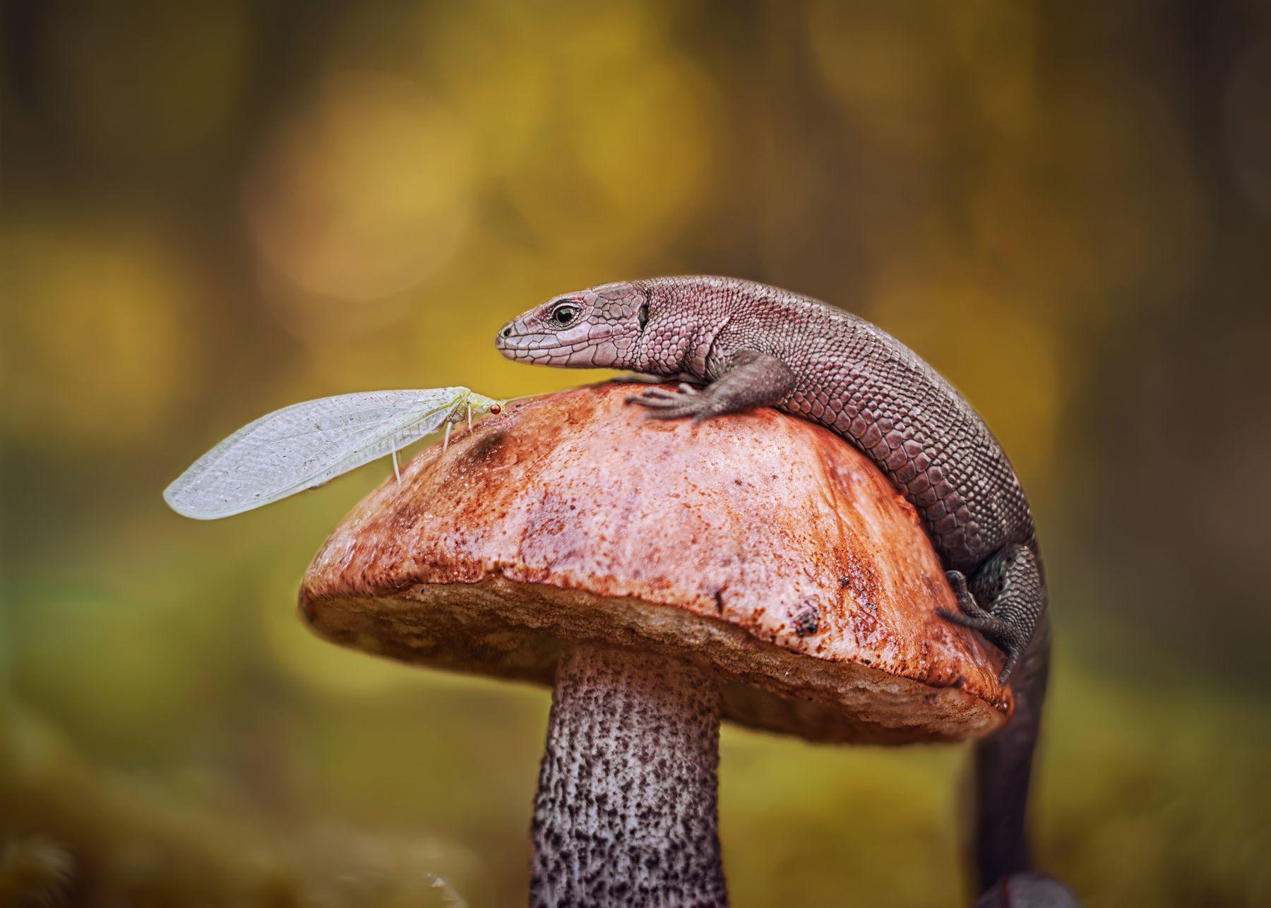 *** ящерица природа лес макро златоглазка гриб