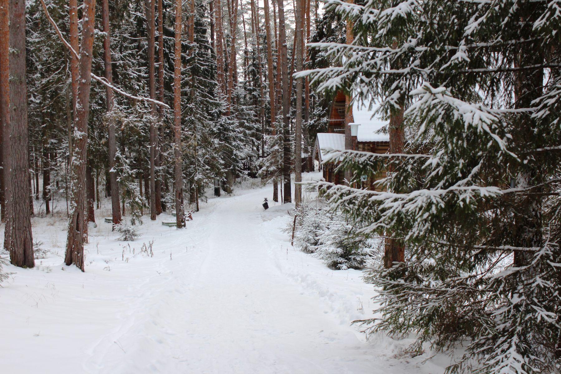 Тверской лес Зимний лес база отдыха Волжанка Тверь
