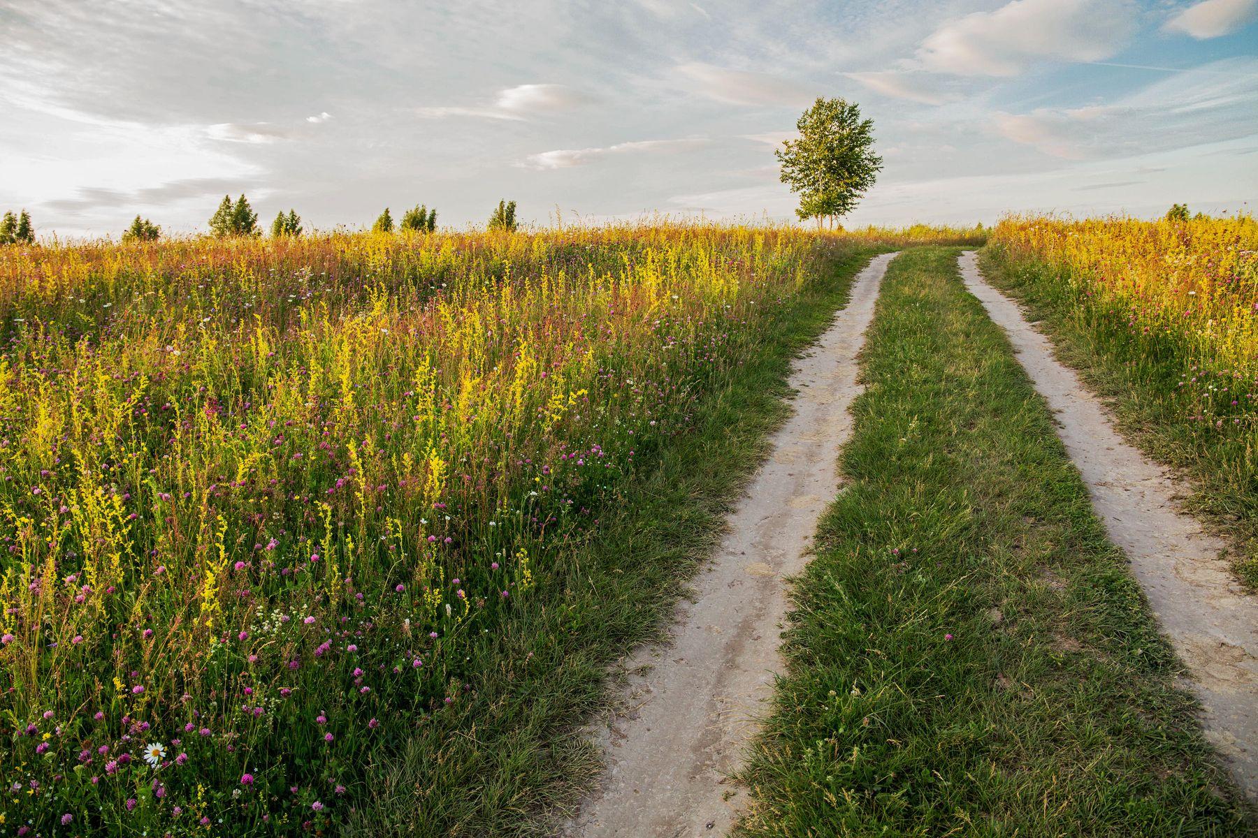 Дорога природа пейзаж лето.дорога дерево татарстан дубровка