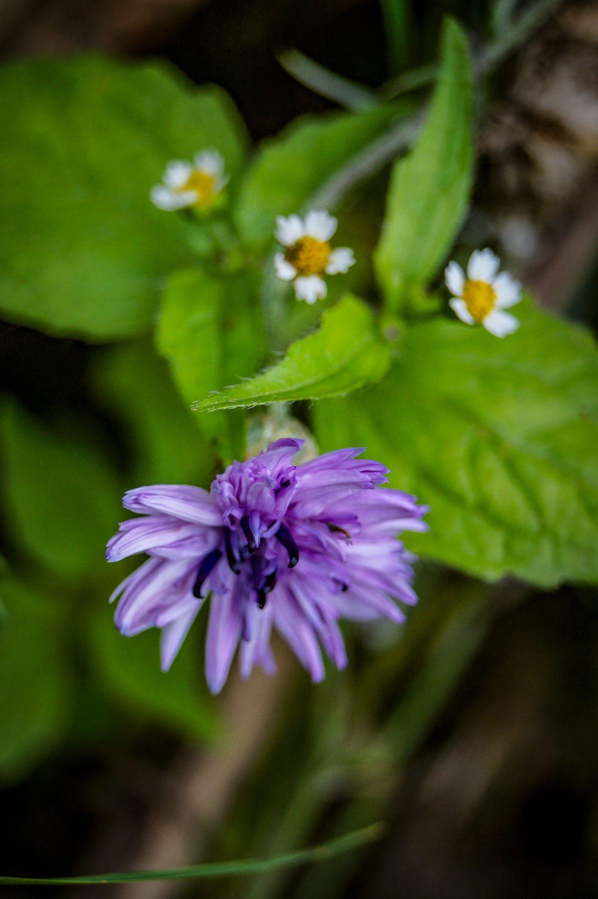 *** цветок лепестки