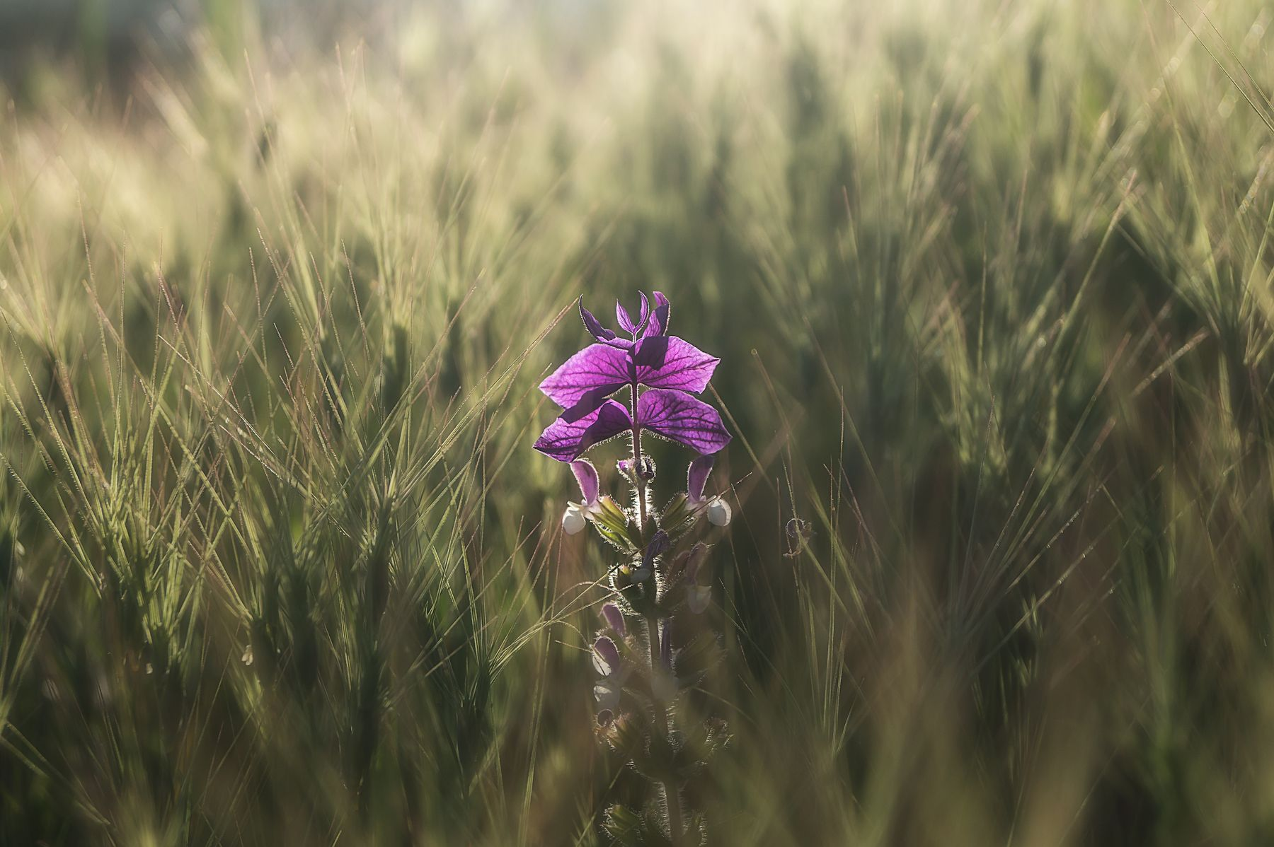 *** цветы макро природа