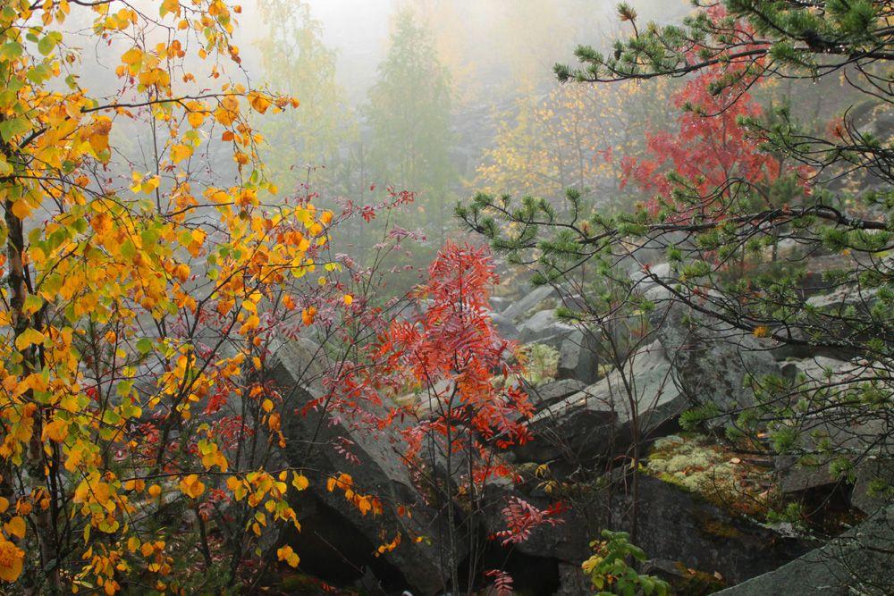 """""""Прощальная краса"""" Туман осень деревья листья"""