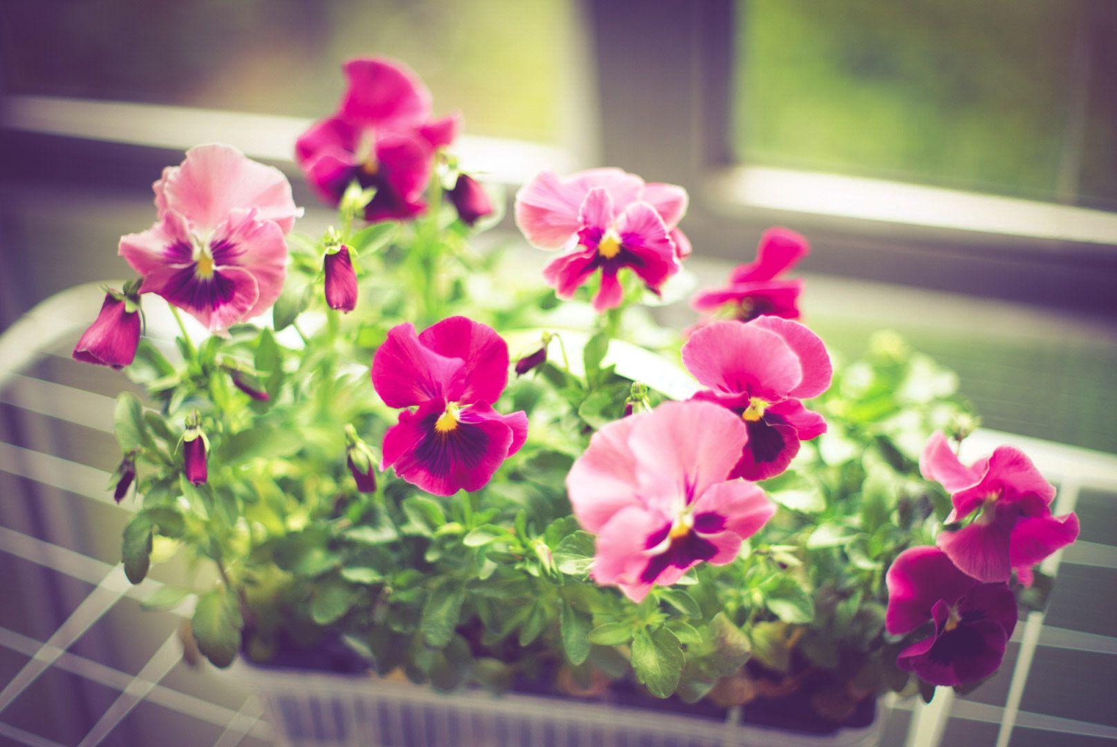 Красота на балконе