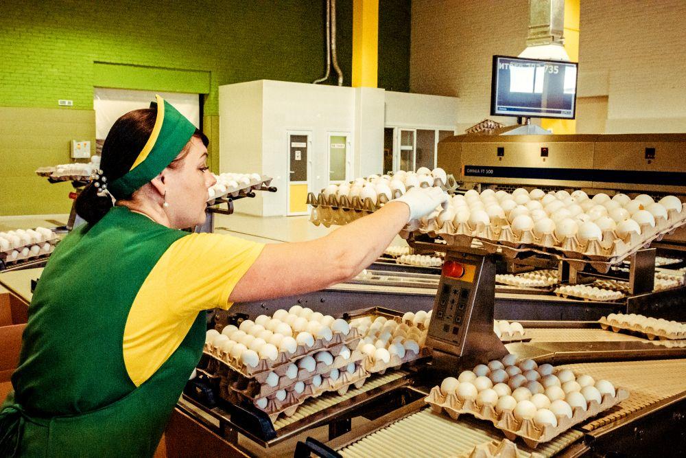 Из серии «Такая работа» работа дело профессия люди труд инсайд журналистика репортаж Россия село деревня птицефабрика яйца расфасовка фасовка еда диета яйцо женщина работница автоматика машина конвейер упаковка 2021