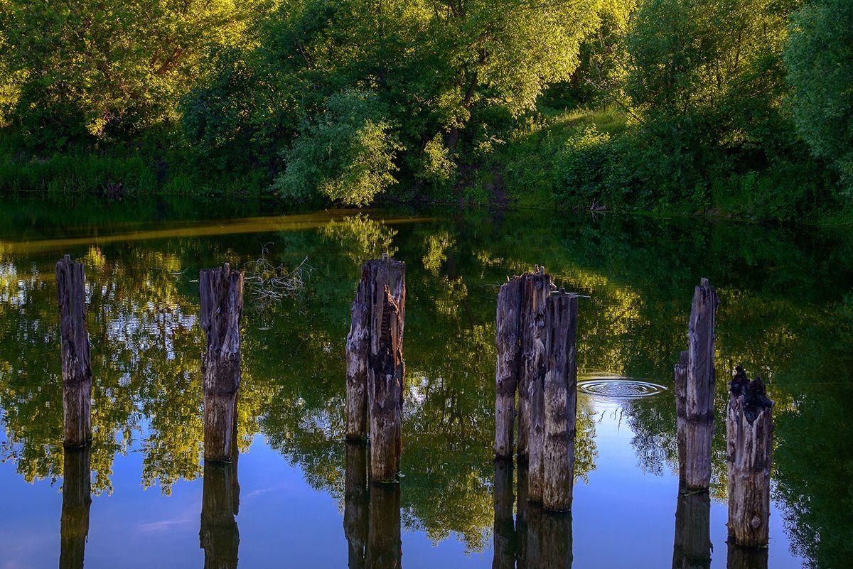 Старый пруд... Лето пруд закат