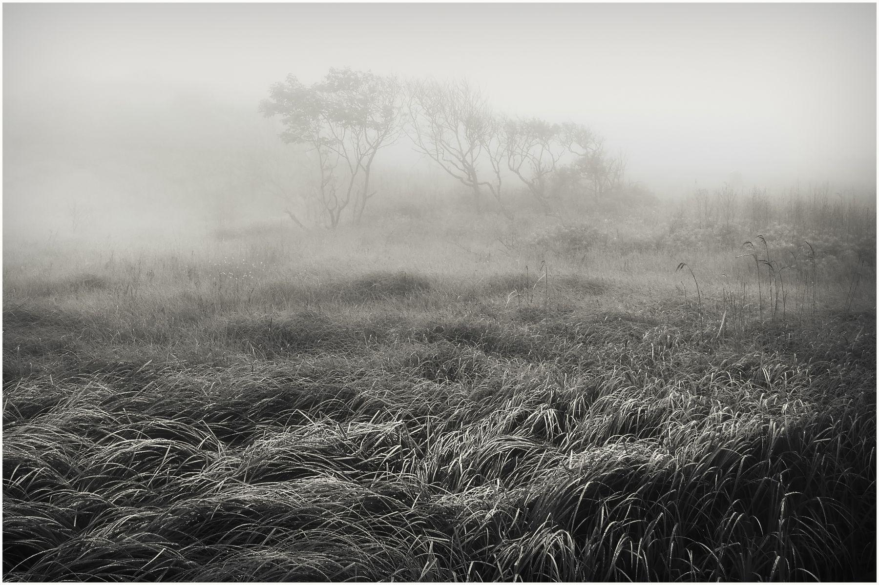 Приморский туман. Путешествия