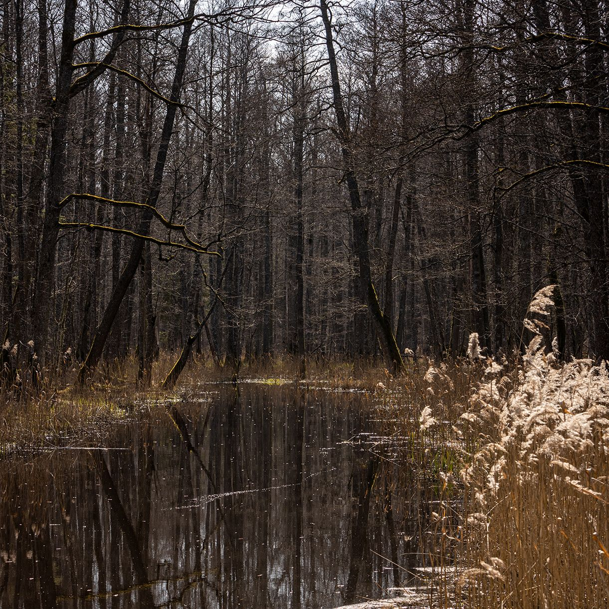 * лес вода камыши