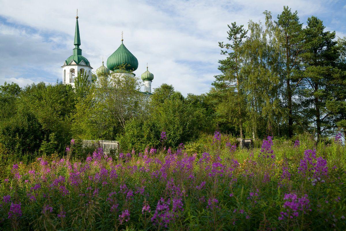 Пасторальный пейзаж с церковью и иван-чаем старая_ладога церкви монастыри