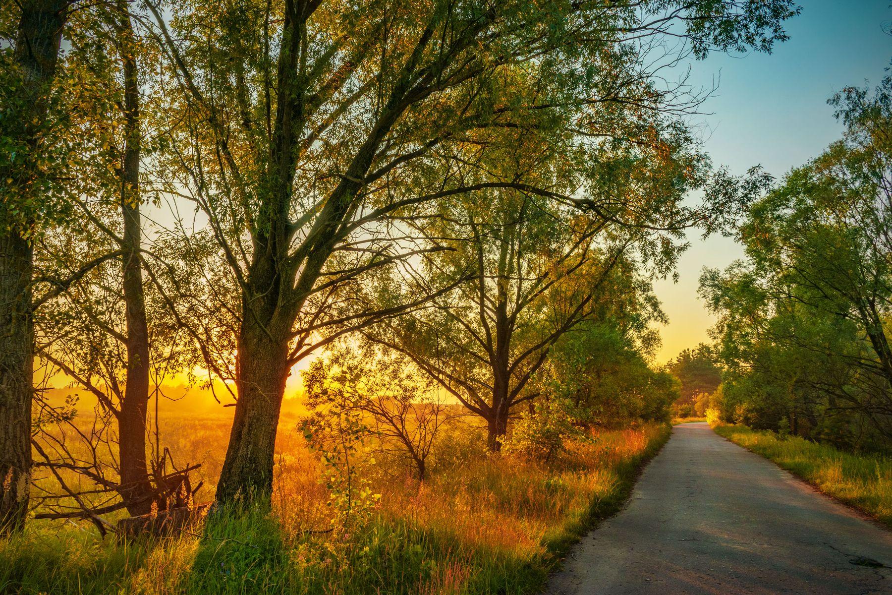 Купальский вечер Закат деревтя лес тени солнечный свет дорога