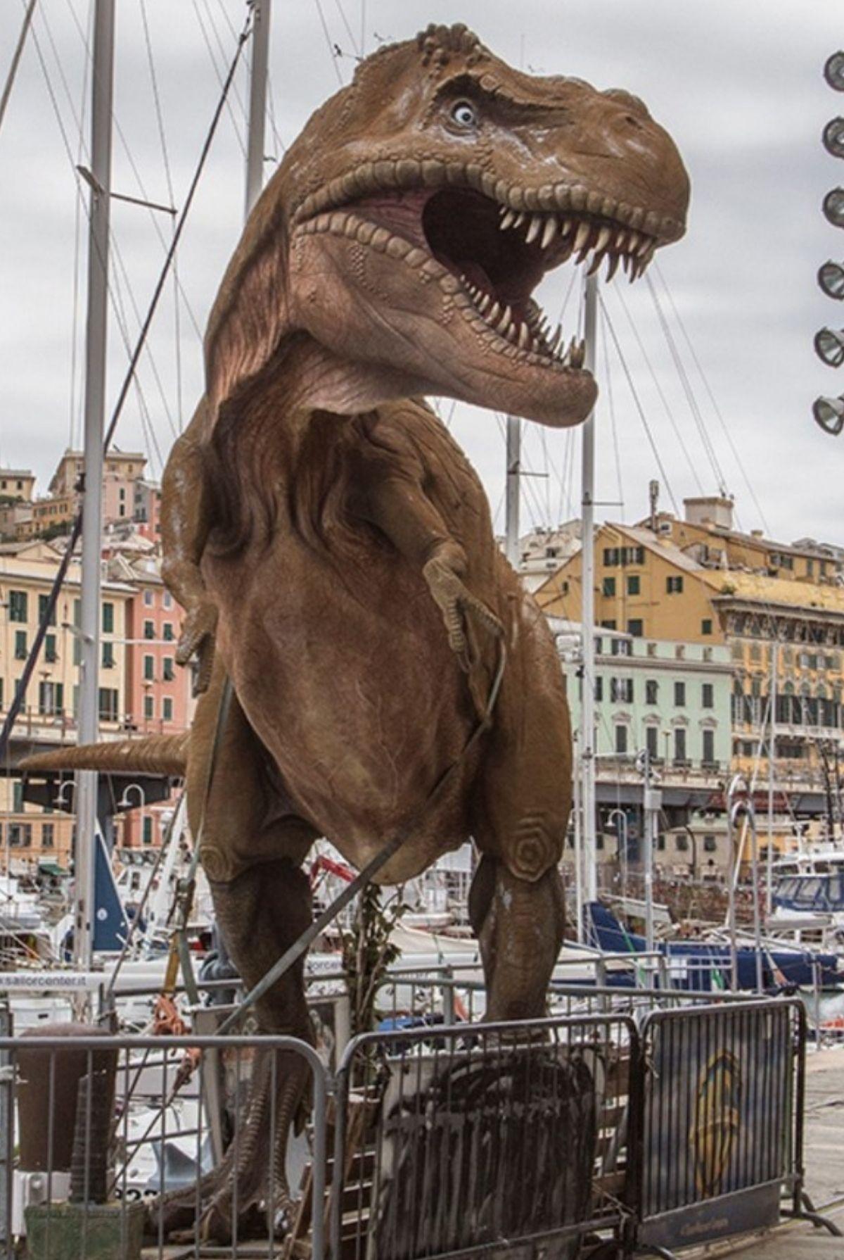 Из жизни ящериц в Генуе. Италия.