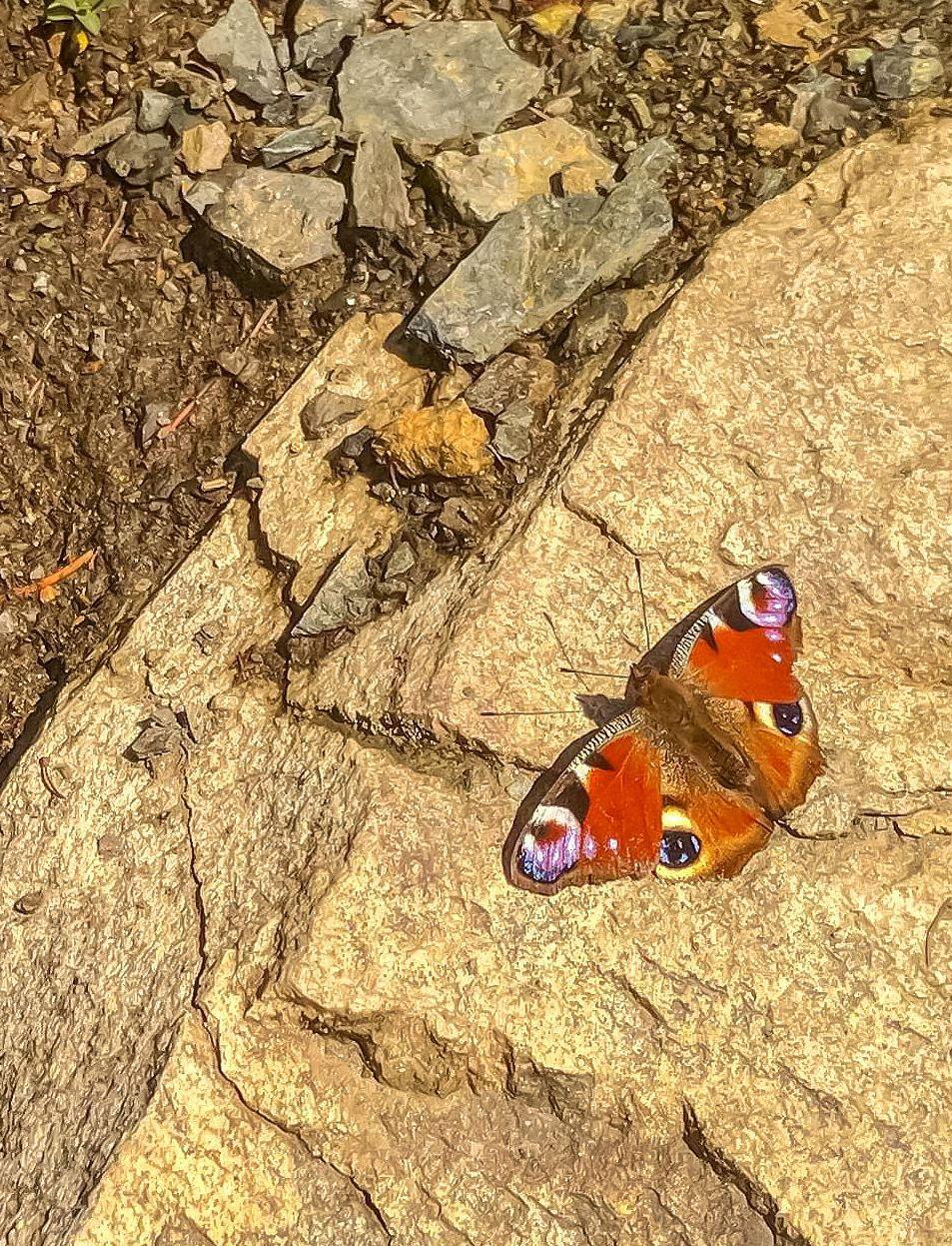 Первая Майская бабочка. Южный Урал Миасс Тургояк природа лес весна Май бабочка