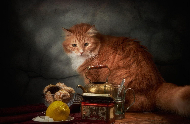 Подозрительный лимон. натюрморт композиция постановка сцена еда лимон кот питомец друг рыжий