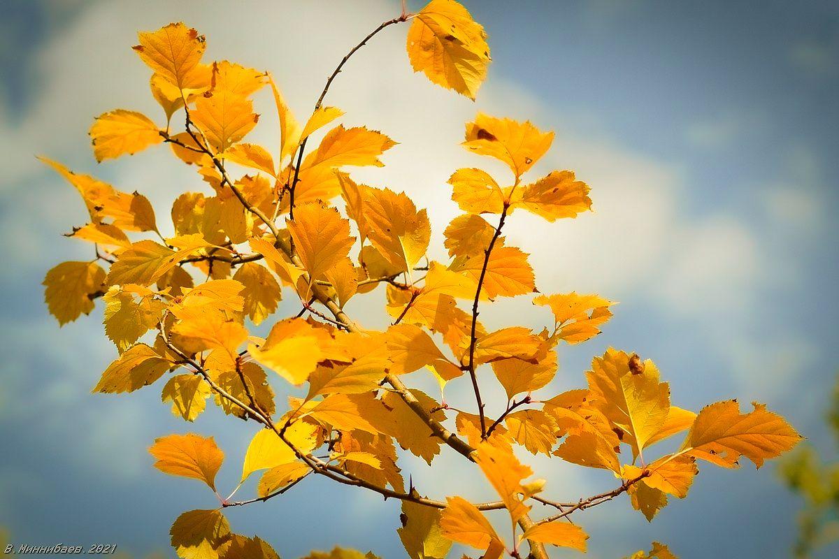 Осенний этюд природа осень листья