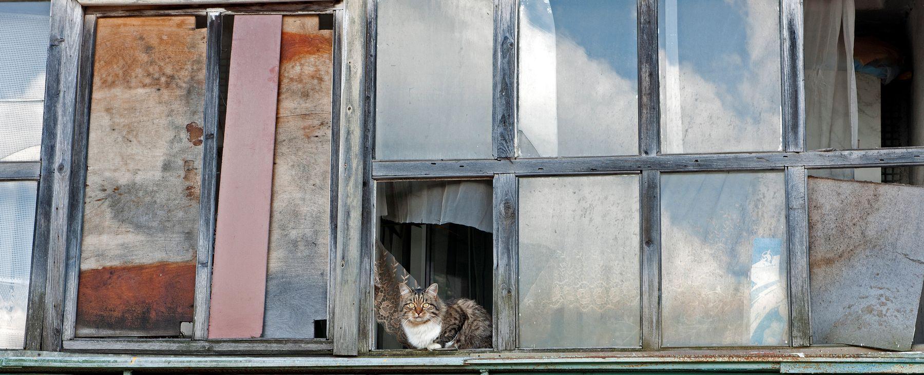 жить город кот