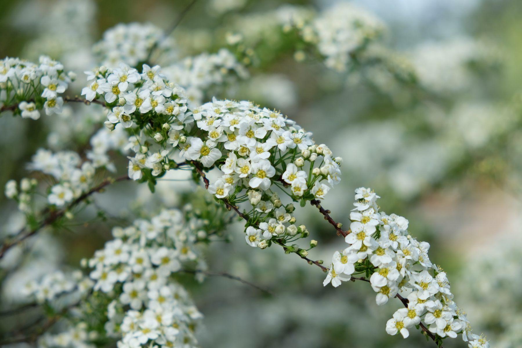 Весенняя весна цветы