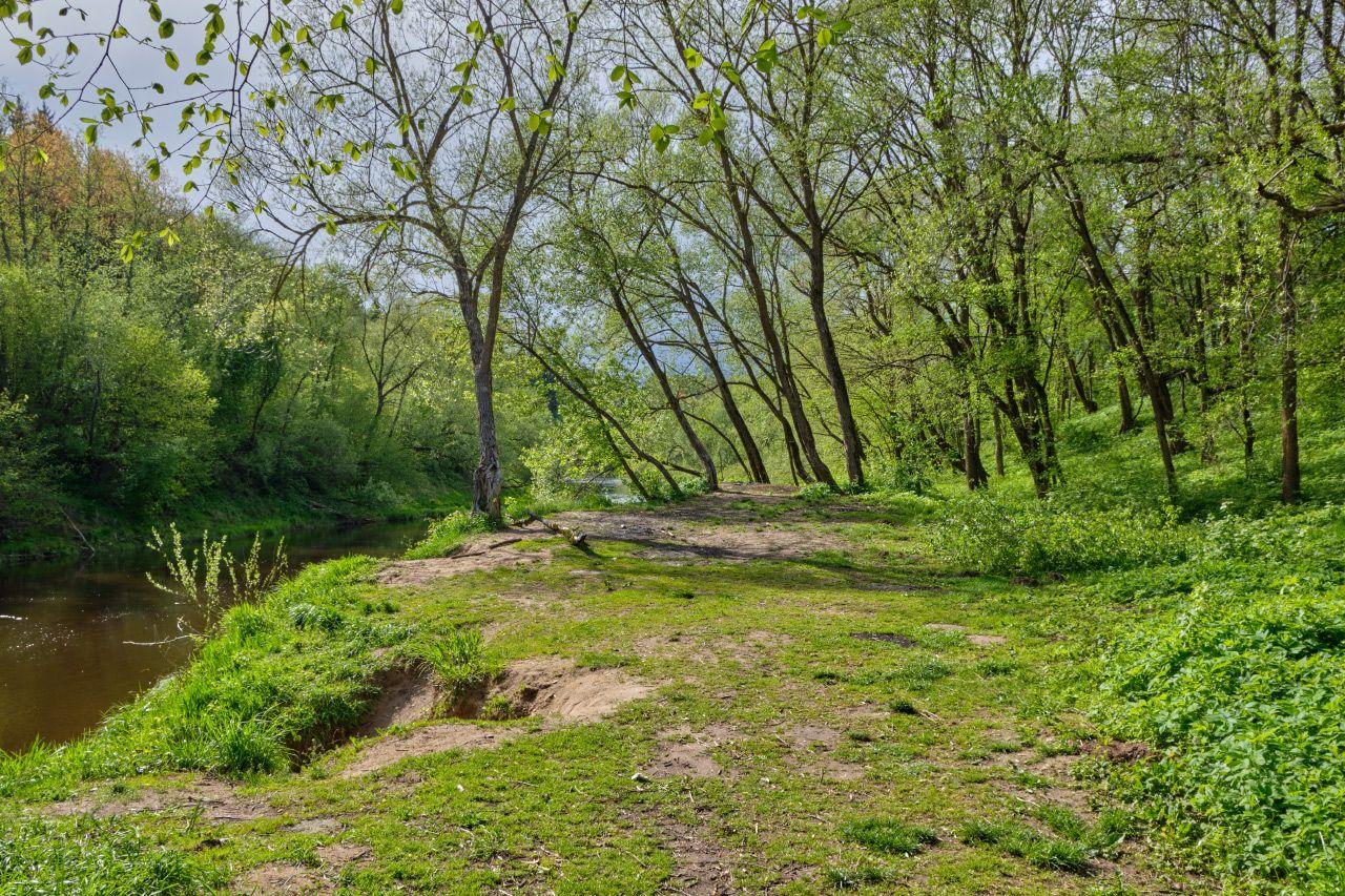 На берегу Лучёсы весна май берег речка деревья солнце