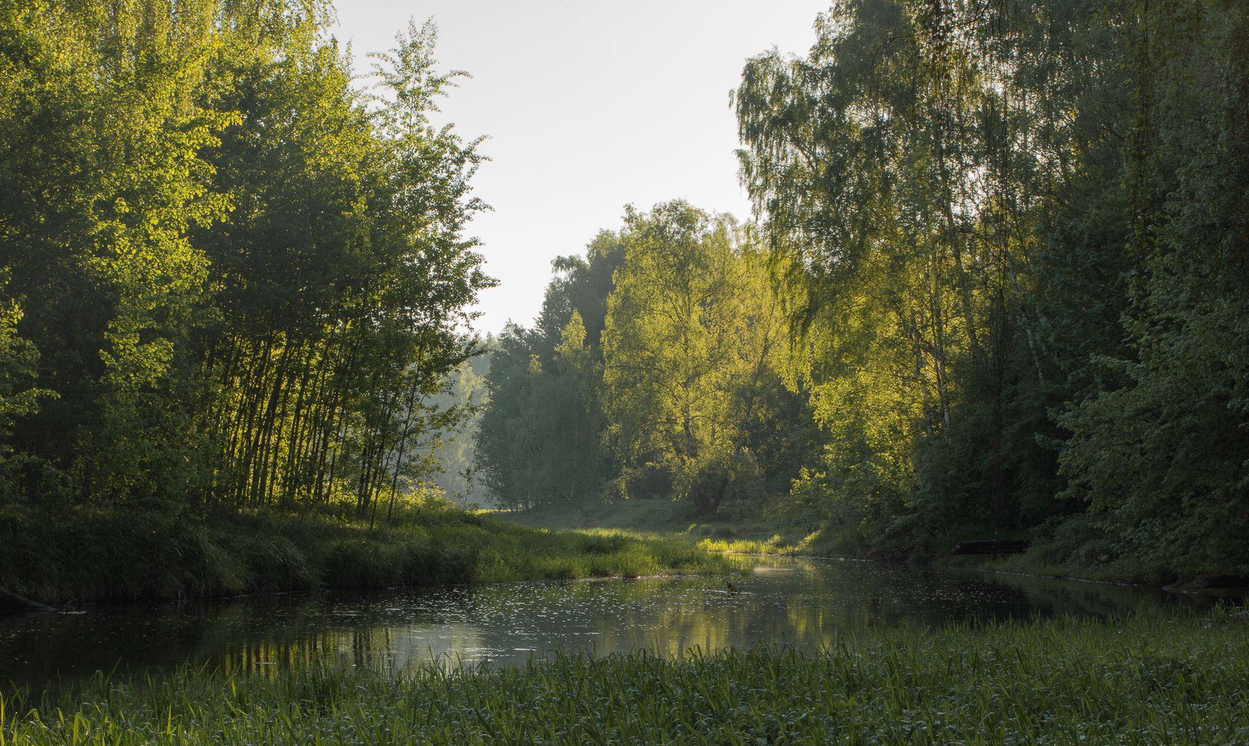Солнечное утро утро река солнце