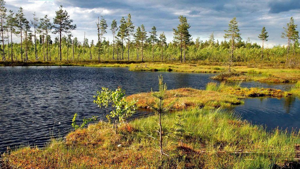 Лесная зарисовка Лес болото лето