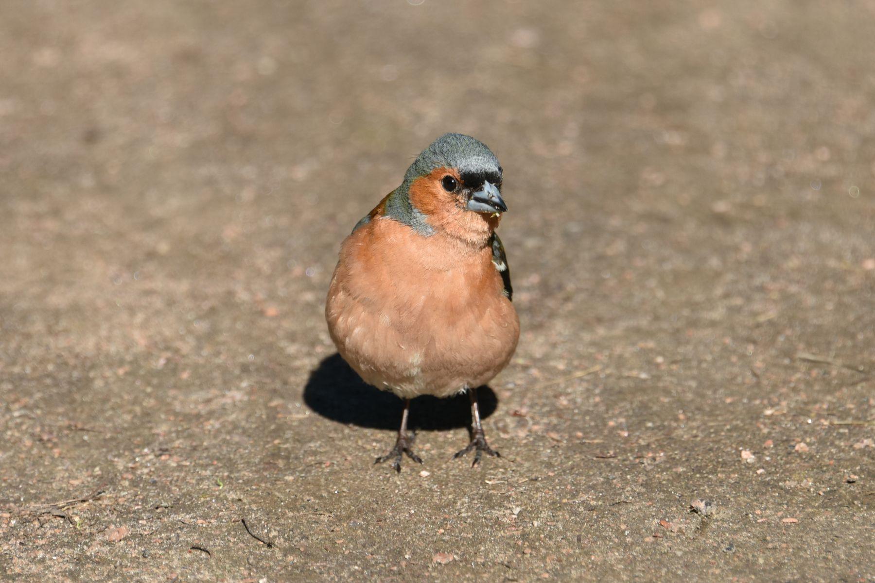 *** Природа птицы