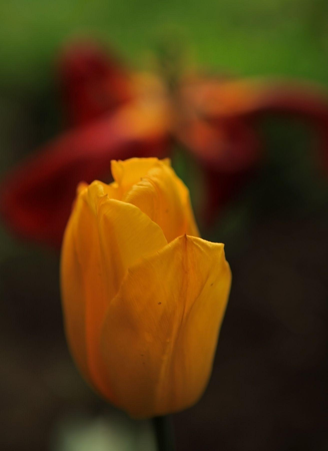 цветы, ветви