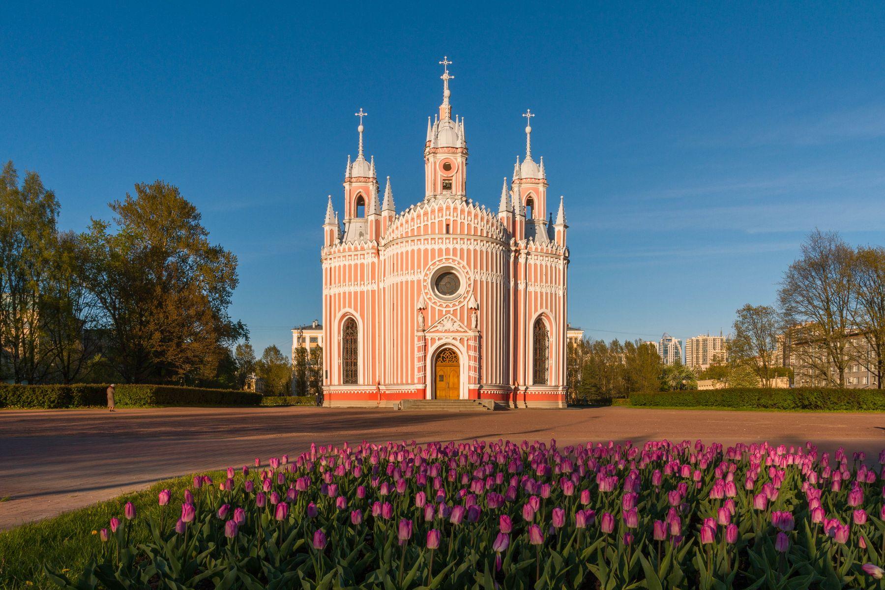 Чесменская церковь и весенние тюльпаны.